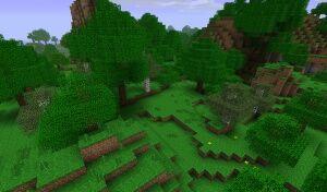 Дощовий ліс.jpg
