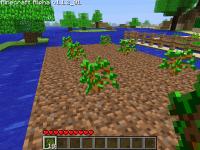 Вирощування дерев