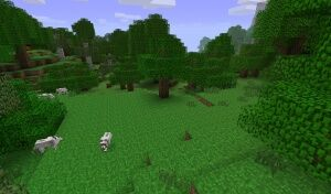 Ліс.jpg