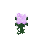 Paeonia.png