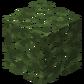 Birch Leaves JE2.png