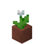 Potted White Tulip JE2 BE2.png