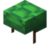 Turtle Shell.png