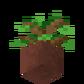 Potted Oak Sapling underside.png