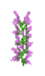 Lilac JE2 BE2.png