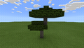 Brote de acacia crecido