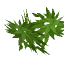 BambooLeaves.png