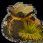 Dragon Claw Seed