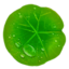 Lotus Leaf.png