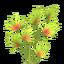 Thorn Grass