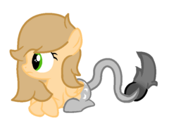 Aguacate Filly.png