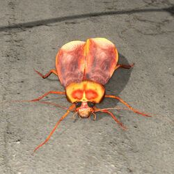 Giant Roach