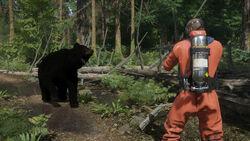 Miscreated-black bear.jpg