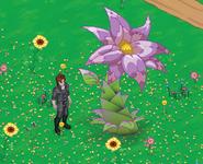 Tulipinny - Localización