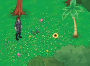 Dark Flowerpiller - Localización
