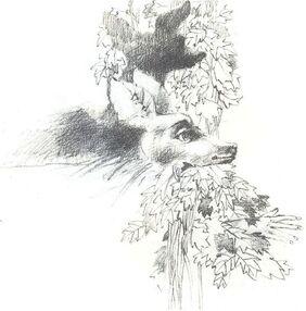 Cierva blanca.jpg