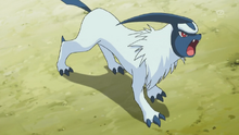 YER ABSOL.png
