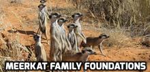 Meerkat Family Foundations.png