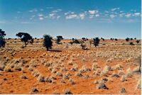 Kalahari desert.jpg