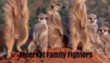 Meerkat Family Fighters.jpg