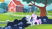 Diamond Tiara and Silver Spoon hiding behind the bushes S4E05