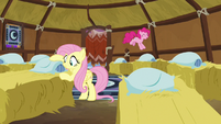 Fluttershy and Pinkie Pie making yak beds S7E11