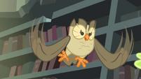 Owlowiscious hooting to Spike S4E23