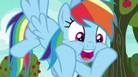 """Rainbow Dash """"nonstop action!"""" S6E18"""