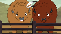 Buffalo surprised S5E6