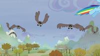 Birds following Rainbow S5E5