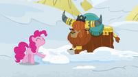 Pinkie Pie pretending to like snow beds S7E11