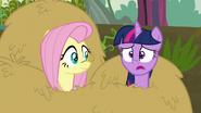 S05E23 Twilight i Fluttershy w sianie