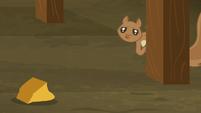Squirrel looks at a pumpkin chunk S5E23