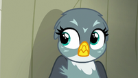 Gabby hears Pinkie Pie and Gilda S6E19