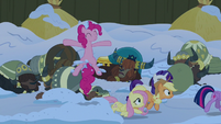 Pinkie Pie pops out of the snow near the yaks S7E11