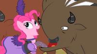 Pinkie Pie pulling the Buffalo's lip S1E21