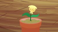 The seedling S4E15