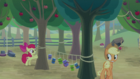 AJ and Apple Bloom set a tin can trap S9E10