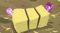 Berryshine and Pina nearly crushed by hay bale S5E17