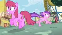 Amethyst Star and Berryshine running away S02E10