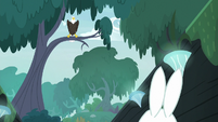 Fluttershy sees eagle perched on tree branch S9E18