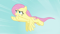 Fluttershy to the rescue S4E16