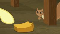 Fluttershy giving pumpkin chunk to squirrel S5E23