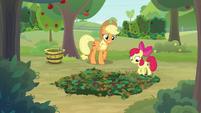 Applejack looks at Apple Bloom's pit trap S9E10
