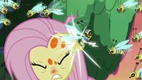 Flash bee stinging Fluttershy's ear S7E20