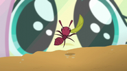 S05E19 Fluttershy ogląda fermę mrówek