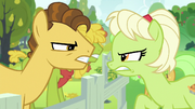 Young Grand Pear vs. young Granny Smith S7E13.png