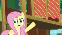 Fluttershy pointing at obstructive curtains S7E5