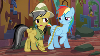 "Daring Do ""I told you to warn me"" S6E13"