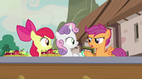 """Scootaloo """"that's... not important"""" S7E8"""
